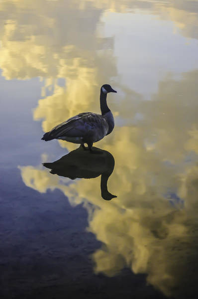Photograph - Goose Silhouette 2 by Sherri Meyer
