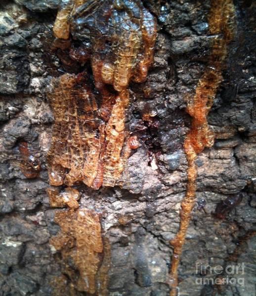 Dakar Photograph - Goree Tree Texture by Fania Simon