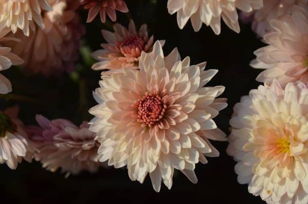 Flawless Photograph - Gorgeous  by Eva Maria Nova