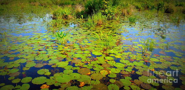 Lillypad Photograph - Gorham Pond Lily Pads by Susan Lafleur