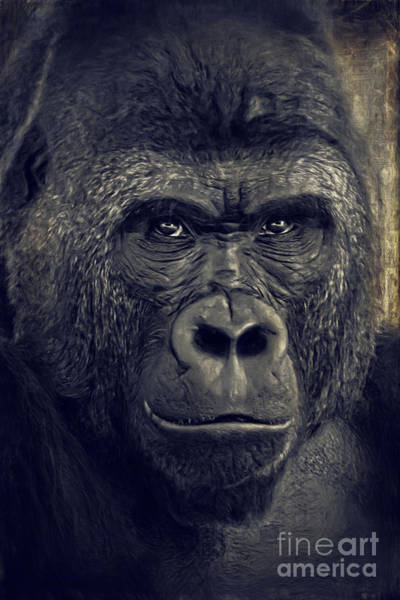Digital Art - Gorilla by Angela Doelling AD DESIGN Photo and PhotoArt