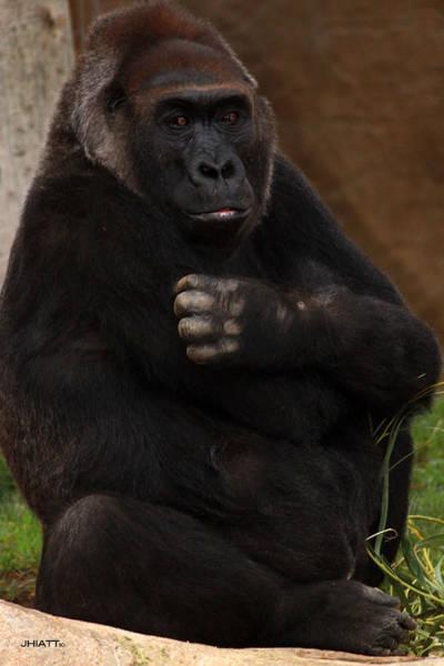 Digital Art - Gorilla Hug by Jhiatt