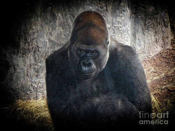 Photograph - Gorilla Portrait by Judy Hall-Folde