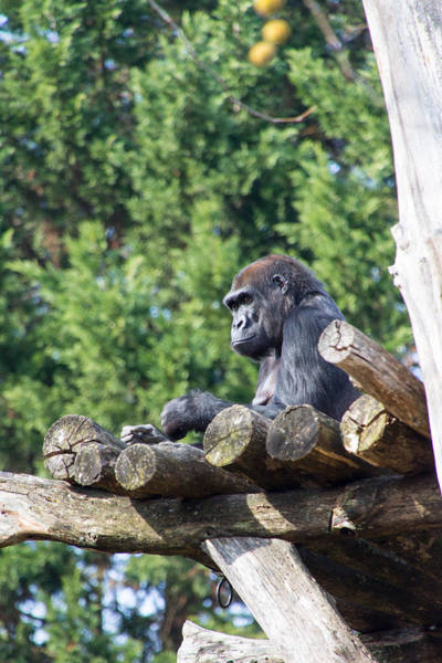 Photograph - Gorilla Tree Fort by SR Green
