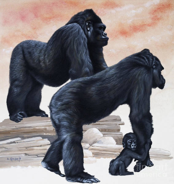 Togetherness Painting - Gorillas by David Nockels