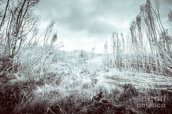 Icicles Wall Art - Photograph - Gormanston Snowscape by Jorgo Photography - Wall Art Gallery