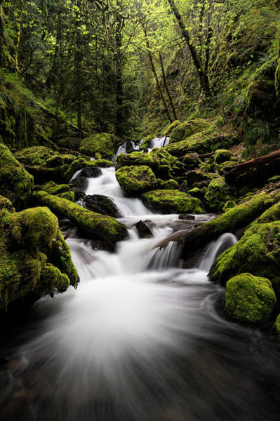 Photograph - Gorton Creek by Brian Bonham