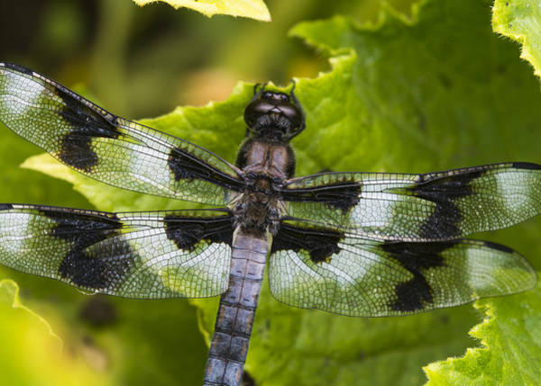 Photograph - Gossamer Wings by Robert Potts