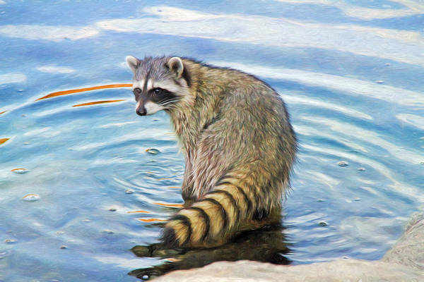 Raccoon Photograph - Got Fish ? by Donna Kennedy