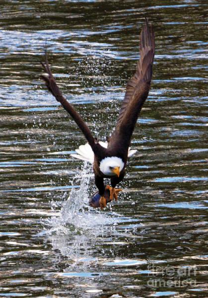 Fish Eagle Photograph - Got It by Mike Dawson