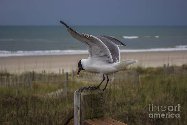 Photograph - Got It Sea Bird by Roberta Byram