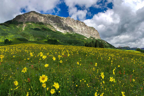 Wall Art - Photograph - Gothic Mountain Wildflowers by Aaron Spong
