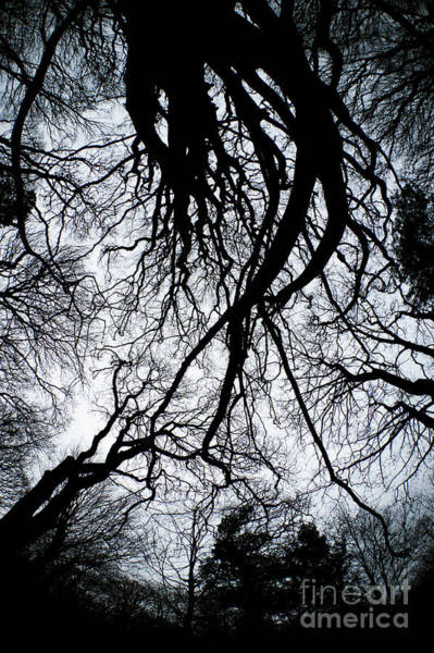 Photograph - Gothic Trees by Keith Morris