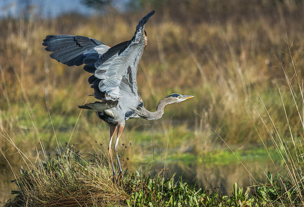 Photograph - Gotta Fly by Loree Johnson