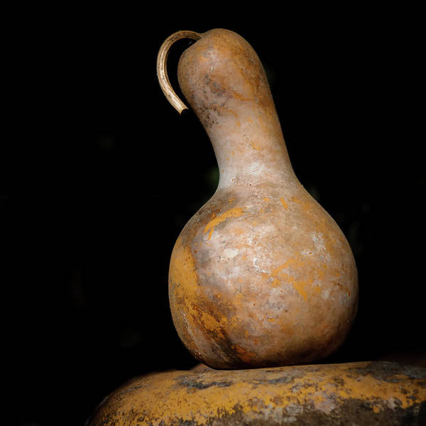 Gourd Photograph - Gourd by Joseph Smith