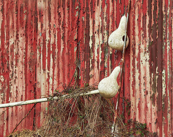 Harper Lee Wall Art - Photograph - Gourds Against The Barn by Bill Chambers
