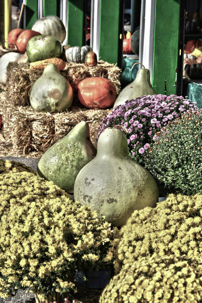 Photograph - Gourds On Display 2 by Lesa Fine