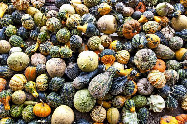 Photograph - Gourds Pumpkins - Wisconsin  by Steven Ralser