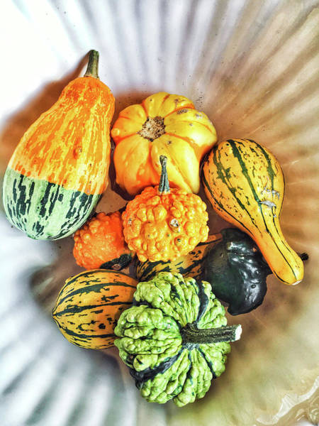 Diversity Wall Art - Photograph - Gourds by Tom Gowanlock
