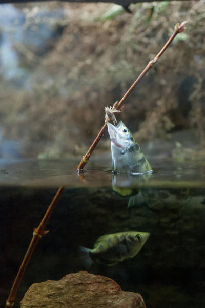 Photograph - Grabbing A Meal On The Limb by Dan Friend