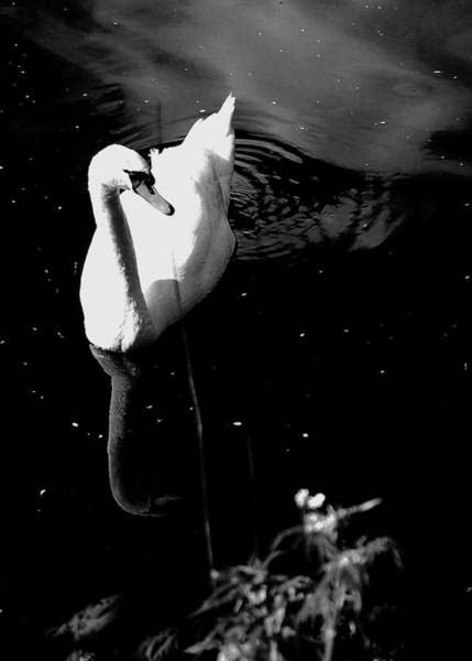 Photograph - Grace by HweeYen Ong
