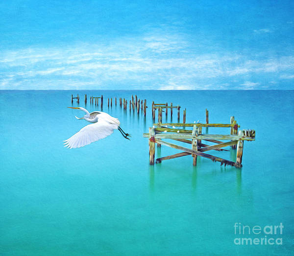 Egret Photograph - Graceful Flight by Laura D Young