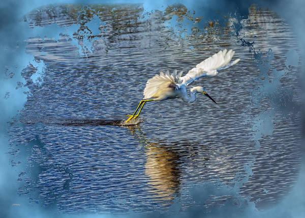 Photograph - Graceful Hunter 2 by John M Bailey