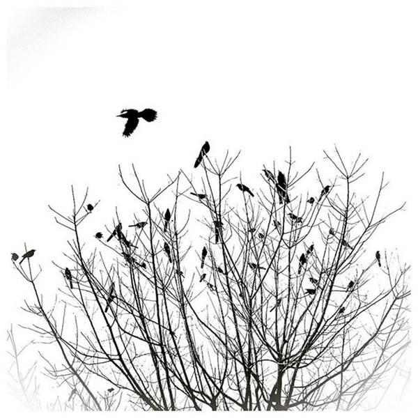 Grackle Photograph - #grackle Pt. II #bird #silhouette #mydtd by Alexis Fleisig
