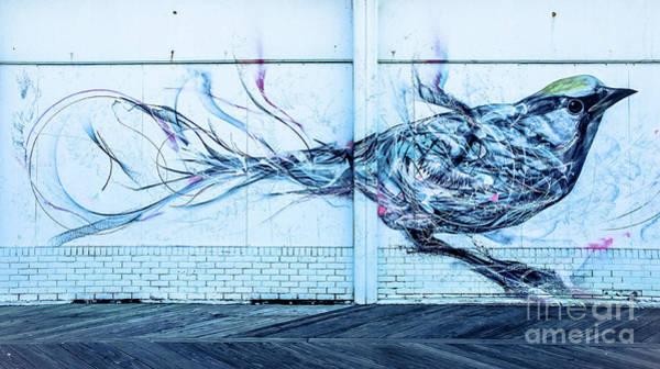 Wall Art - Photograph - Graffiti Bird by Colleen Kammerer