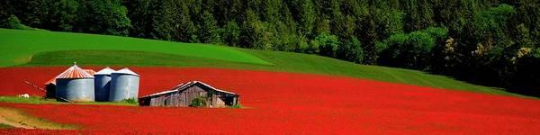 Photograph - Grain Bins Barn Red Clover by Jerry Sodorff