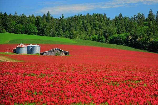 Grain Bins Barn Red Clover Art Print