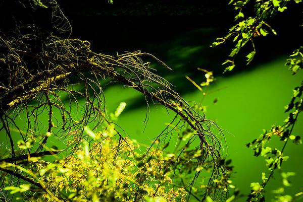 James Craddock Photograph - Green Mashup by James Craddock