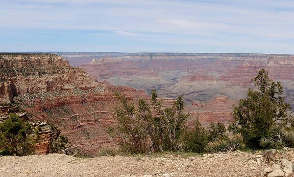 Photograph - Grand Canyon - 15 by Christy Pooschke