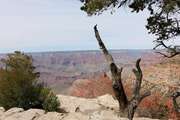 Photograph - Grand Canyon - 2 by Christy Pooschke
