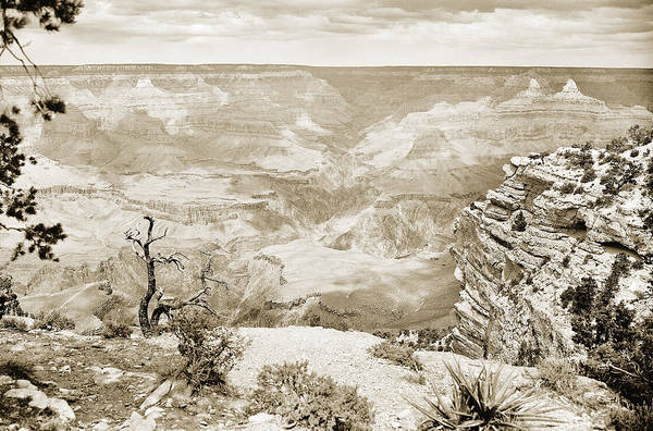 Photograph - Grand Canyon Arizona Fine Art Photograph In Sepia 3533.01 by M K Miller