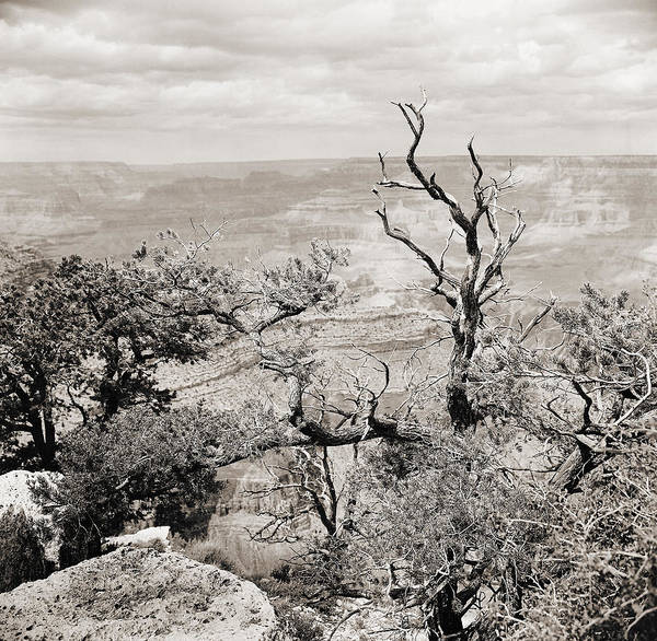 Photograph - Grand Canyon Arizona Fine Art Photograph In Sepia 3534.01 by M K Miller