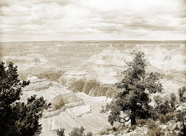 Photograph - Grand Canyon Arizona Fine Art Photograph In Sepia 3535.01 by M K Miller