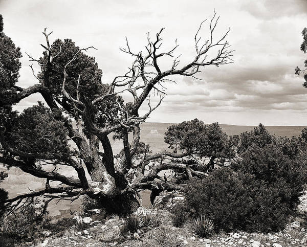 Photograph - Grand Canyon Arizona Fine Art Photograph In Sepia 3536.01 by M K Miller