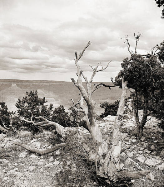 Photograph - Grand Canyon Arizona Fine Art Photograph In Sepia 3537.01 by M K Miller