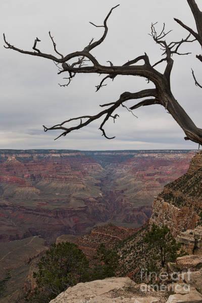 Photograph - Grand Canyon Branches by Ana V Ramirez