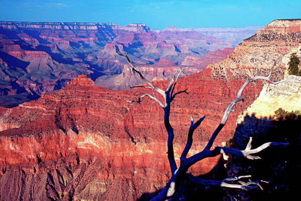 George Canyon Photograph - Grand Canyon Glows In Red by George Oze