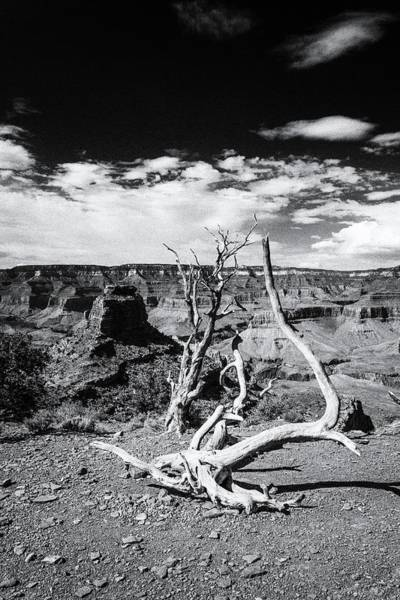 Photograph - Grand Canyon Landscape by Alex Conu