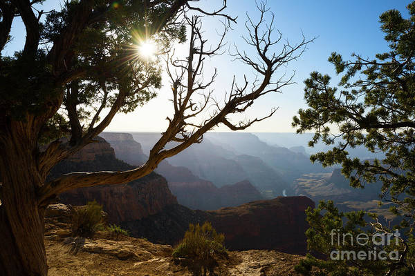 Wall Art - Photograph - Grand Canyon Light by Jamie Pham