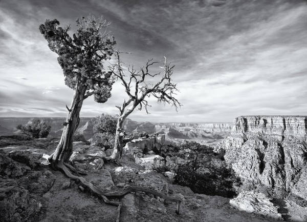 Photograph - Grand Canyon - Monochrome by Darren White