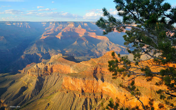 Photograph - Grand Canyon South Rim - Pine At Right by Victoria Oldham
