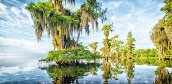 Photograph - Grand Cypress by Ghostwinds Photography