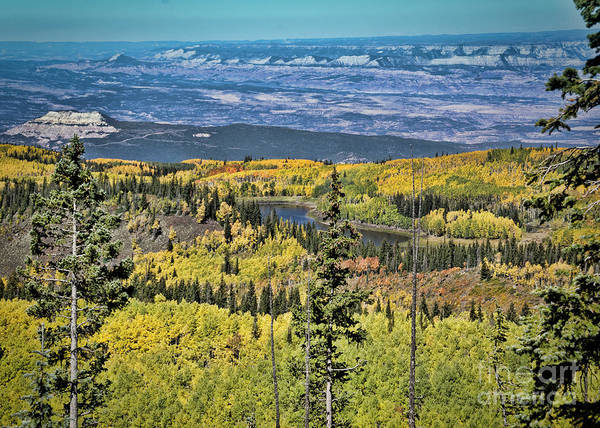 Grand Mesa National Forest Photograph - Grand Mesa Beauty by Janice Pariza