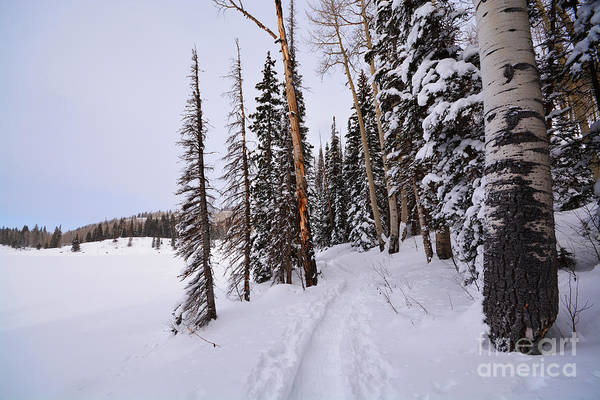 Photograph - Grand Mesa Winter by Kate Avery