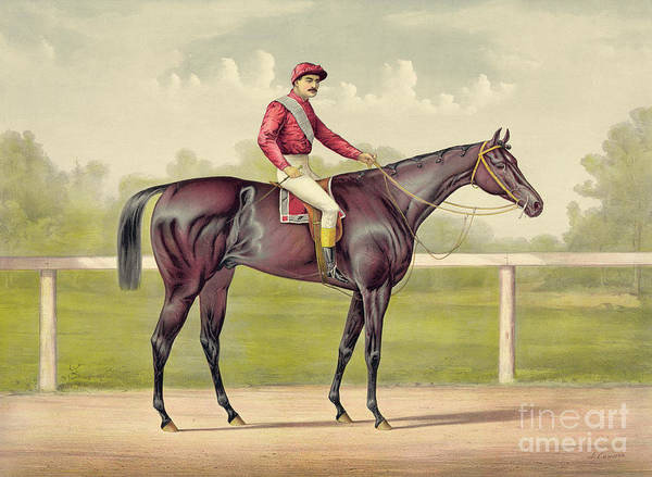 Equestrian Drawing - Grand Racer Kingston by Currier and Ives