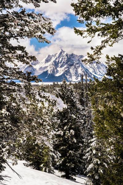 Photograph - Grand Teton Through The Pines by TL Mair